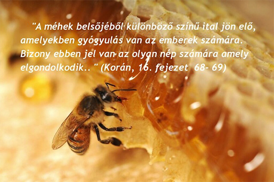artrózis és mézzel történő kezelése mely szakember kezeli a térdfájdalmakat